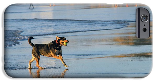 Beach Dog Playing Fetch IPhone Case by Bonnie Follett