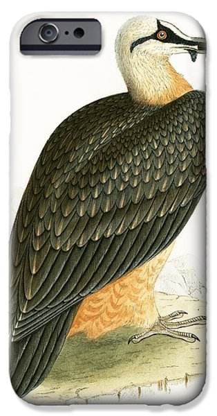 Bearded Vulture IPhone 6s Case by English School