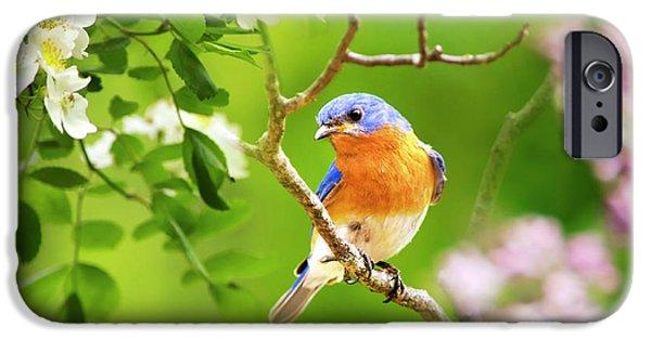 Beautiful Bluebird IPhone 6s Case by Christina Rollo