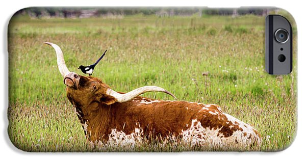 Best Friends - Texas Longhorn Magpie IPhone 6s Case by TL Mair
