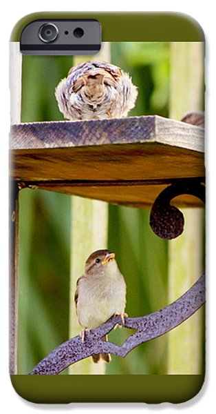 Birds On The Feeder IPhone Case by W Gilroy