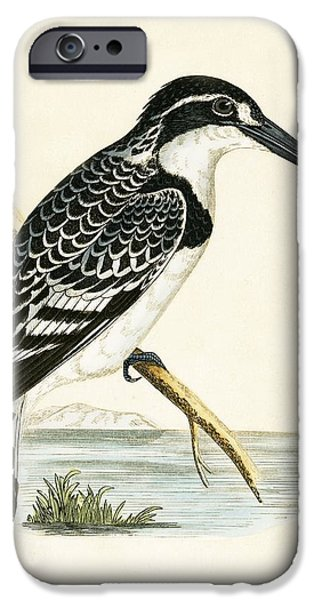 Black And White Kingfisher IPhone 6s Case by English School