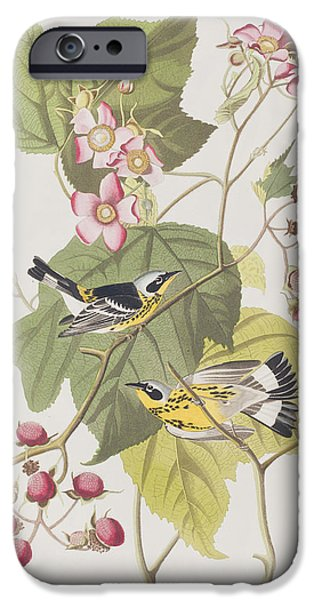 Black And Yellow Warblers IPhone Case by John James Audubon