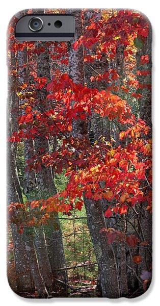 Black Birch Tree Splendor IPhone Case by Juergen Roth