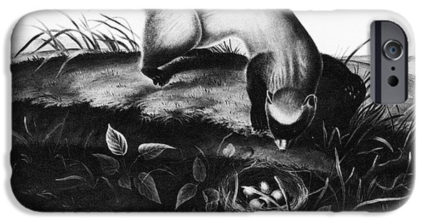 Black-footed Ferret IPhone Case by Granger