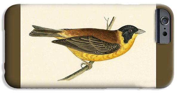 Black Headed Bunting IPhone 6s Case by English School