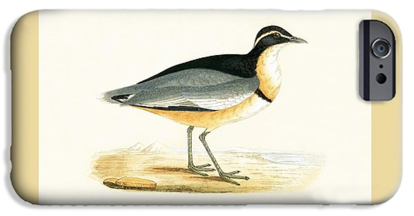 Black Headed Plover IPhone 6s Case by English School