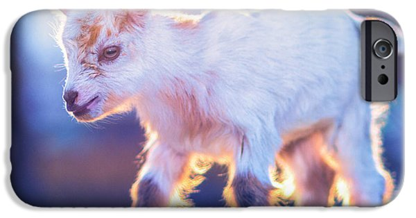 Little Baby Goat Sunset IPhone 6s Case by TC Morgan