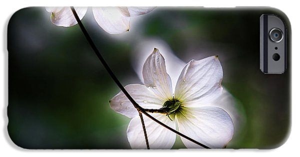Blooming Dogwoods In Yosemite 2 IPhone Case by Larry Marshall