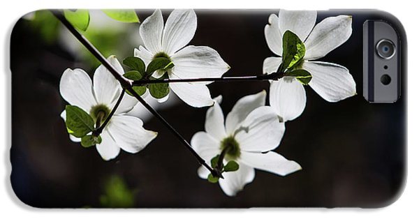 Blooming Dogwoods In Yosemite 4 IPhone Case by Larry Marshall