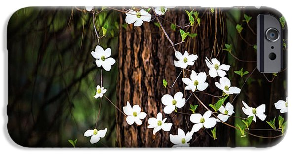 Blooming Dogwoods In Yosemite IPhone Case by Larry Marshall