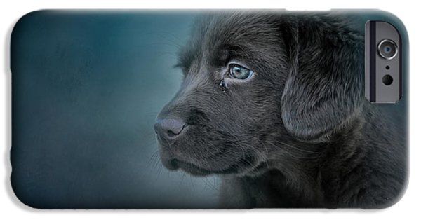 Blue Eyed Puppy IPhone Case by Jai Johnson