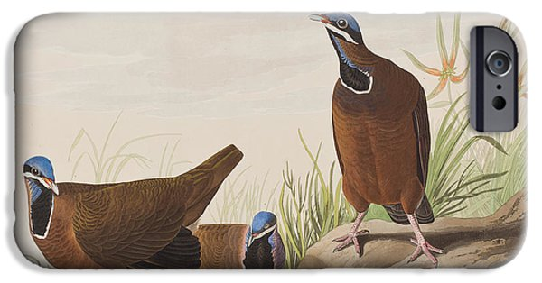 Blue Headed Pigeon IPhone Case by John James Audubon