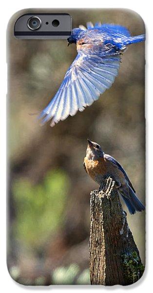Bluebird Buzz IPhone 6s Case by Mike Dawson
