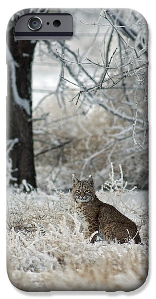 Bobcat And Heavy Frost IPhone Case by Gary Langley