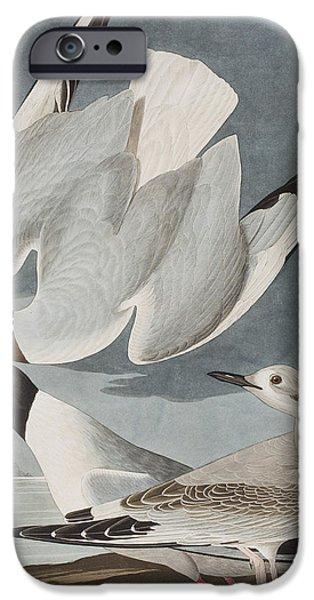 Bonapartian Gull IPhone Case by John James Audubon