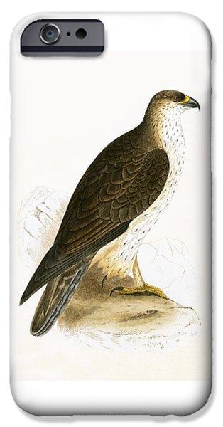Bonelli's Eagle IPhone Case by English School