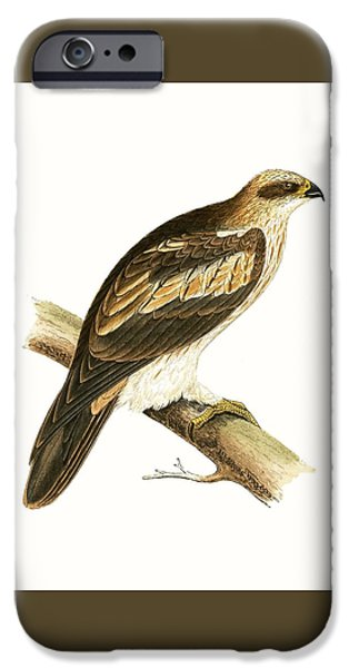 Booted Eagle IPhone 6s Case by English School