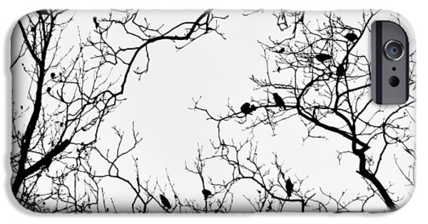 Branches And Birds IPhone 6s Case by Sandy Taylor