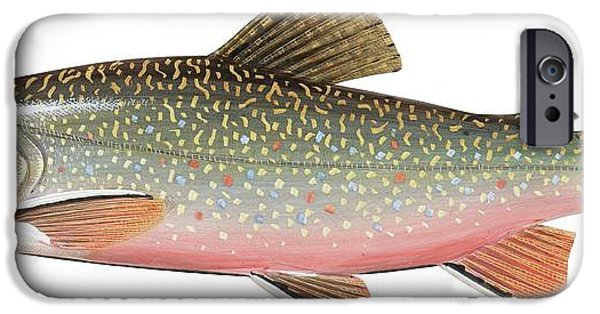 Brook Trout IPhone Case by American School