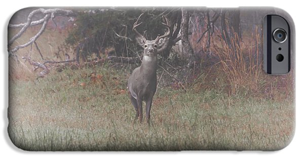 Buck In Foggy Bottoms IPhone Case by Robert Frederick