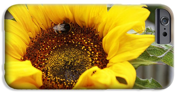 Bumble Bee IPhone Case by Les Cunliffe
