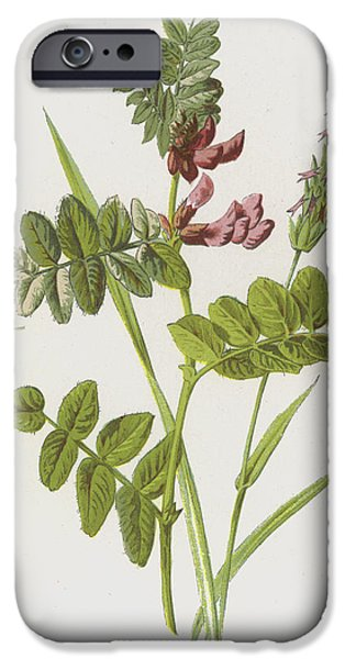 Bush Vetch And Sweet Scented Vernal Grass IPhone Case by Frederick Edward Hulme