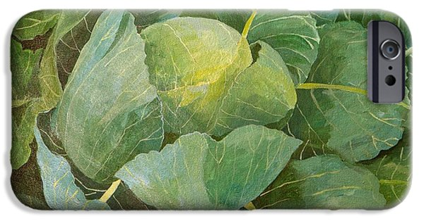 Cabbage IPhone 6s Case by Jennifer Abbot