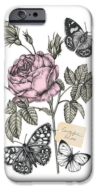 Cabbage Rose IPhone Case by Stephanie Davies