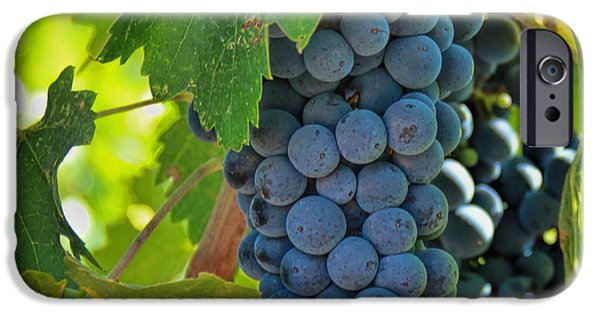 Cabernet Grapes IPhone 6s Case by Nancy Ingersoll