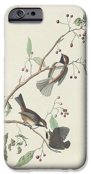 Canadian Titmouse IPhone 6s Case by John James Audubon