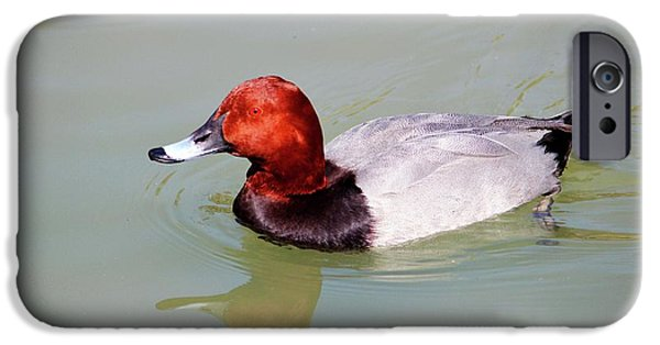 Canvasback IPhone Case by Cynthia Guinn