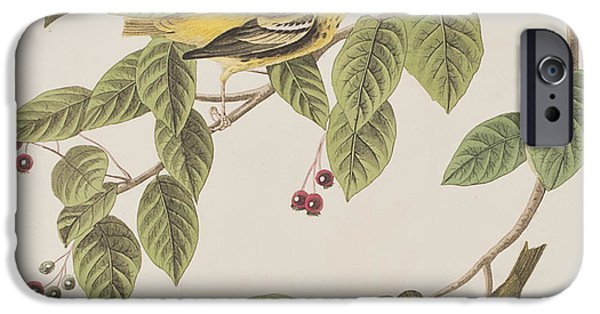 Carbonated Warbler IPhone 6s Case by John James Audubon
