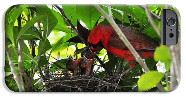 Cardinals Chowtime IPhone Case by Al Powell Photography USA