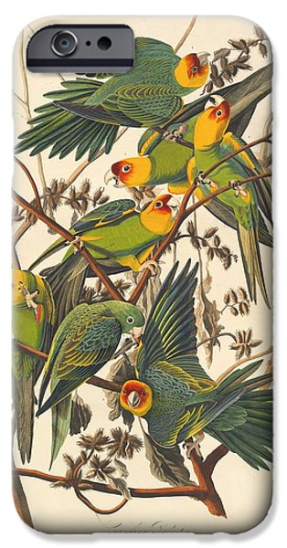Carolina Parrot IPhone Case by John James Audubon