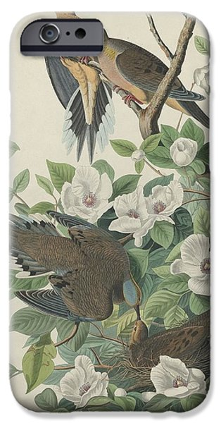 Carolina Pigeon Or Turtle Dove IPhone 6s Case by John James Audubon