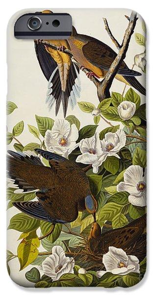 Carolina Turtledove IPhone 6s Case by John James Audubon