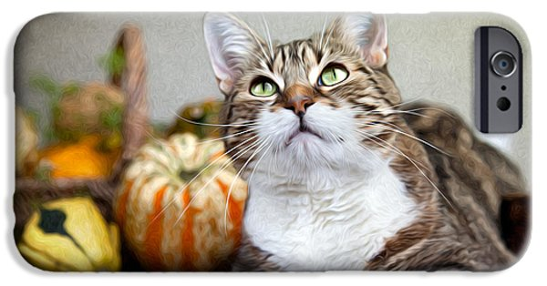 Cat And Pumpkins IPhone 6s Case by Nailia Schwarz