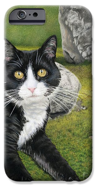 Cat In A Rock Garden IPhone Case by Sarah Batalka
