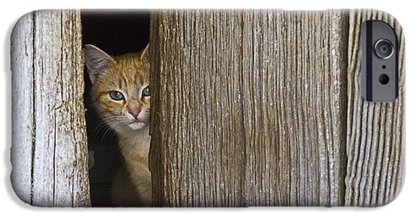 Cautious Kitty IPhone Case by Heiko Koehrer-Wagner