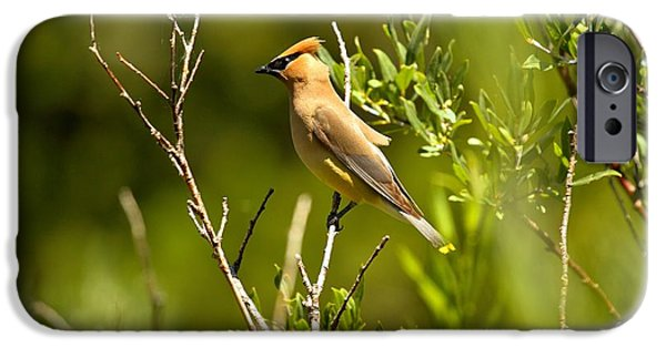 Cedar Waxwing At Glacier IPhone 6s Case by Adam Jewell