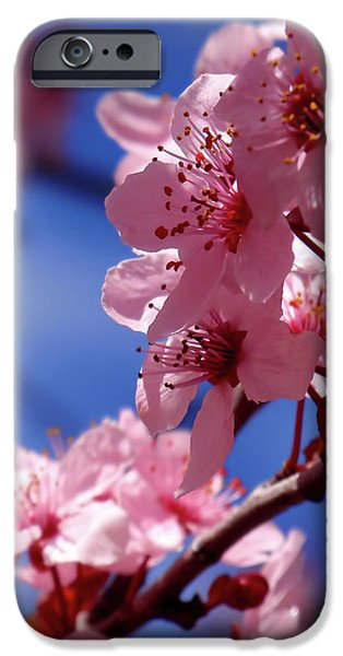 Cherry Blossom IPhone Case by Rona Black