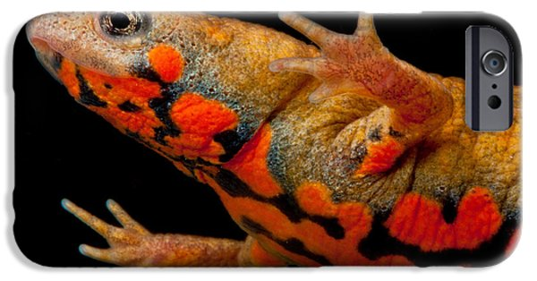 Chuxiong Fire Belly Newt IPhone 6s Case by Dant� Fenolio