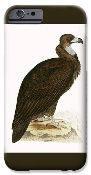 Cinereous Vulture IPhone 6s Case by English School