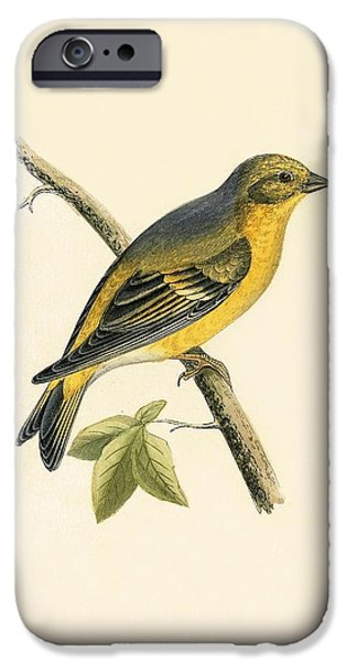 Citril Finch IPhone Case by English School