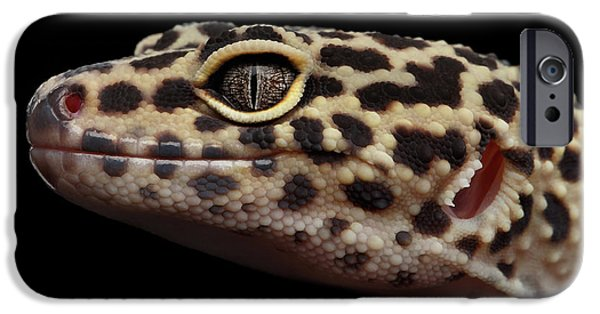 Close-up Leopard Gecko Eublepharis Macularius Isolated On Black Background IPhone 6s Case by Sergey Taran