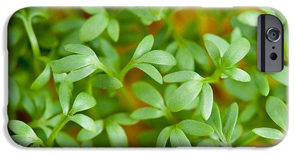 Close-up Of Lepidium Sativum Or Cress Leaves  IPhone Case by Arletta Cwalina