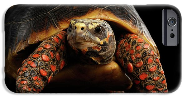 Close-up Of Red-footed Tortoises, Chelonoidis Carbonaria, Isolated Black Background IPhone 6s Case by Sergey Taran