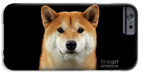 Close-up Portrait Of Head Shiba Inu Dog, Isolated Black Background IPhone 6s Case by Sergey Taran