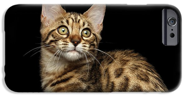 Closeup Bengal Kitty On Isolated Black Background IPhone 6s Case by Sergey Taran